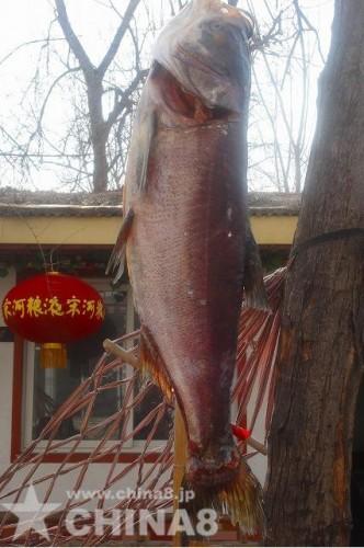 黄河の魚?