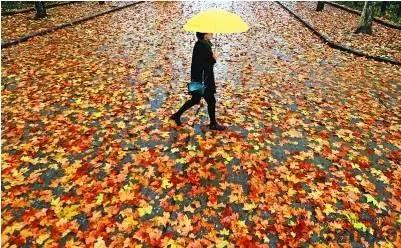 落葉in上海